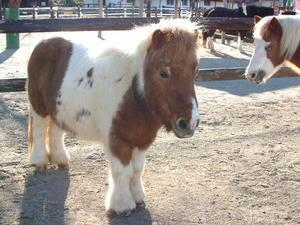 pony003.jpgのサムネイル画像